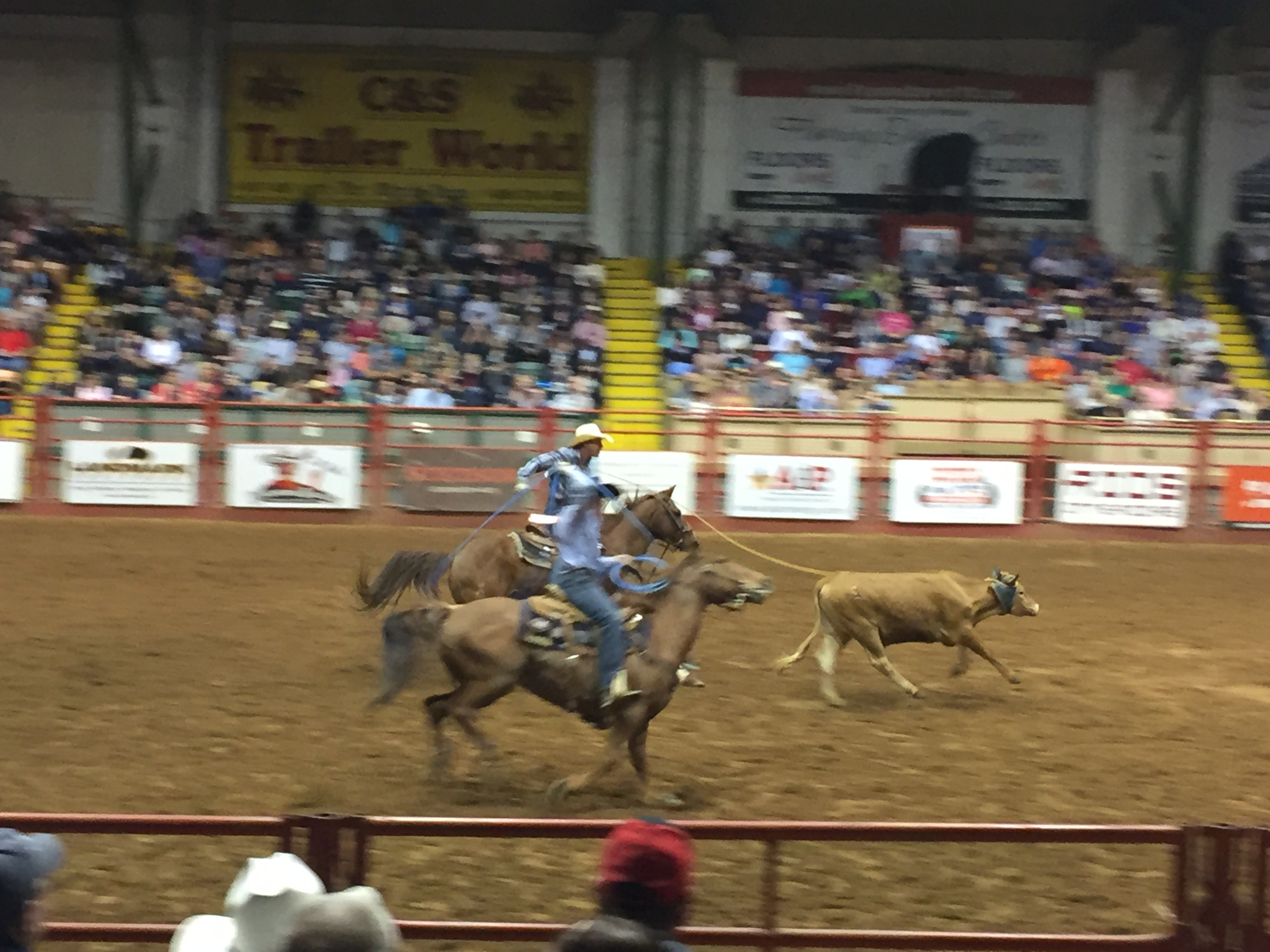 Stockyards Championship Rodeo Hopping Across The Pond